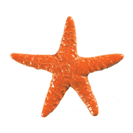 STARFISH ORANGE (STAORAB) 5″