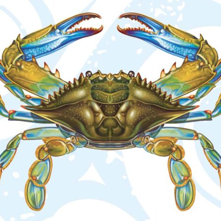 Blue Crab 11″x8″