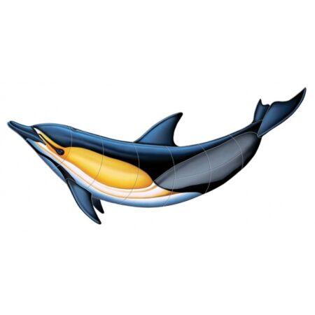 Common Dolphin-B