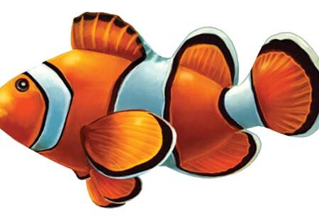Clown Fish 8″x4″