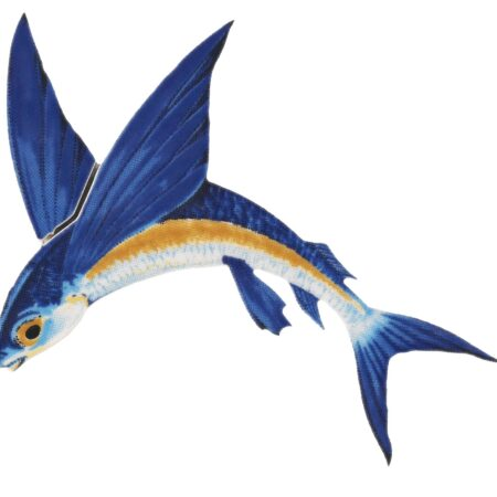 Flying Fish-A Reverse 7″x6″