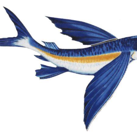 Flying Fish-B 8″x5″
