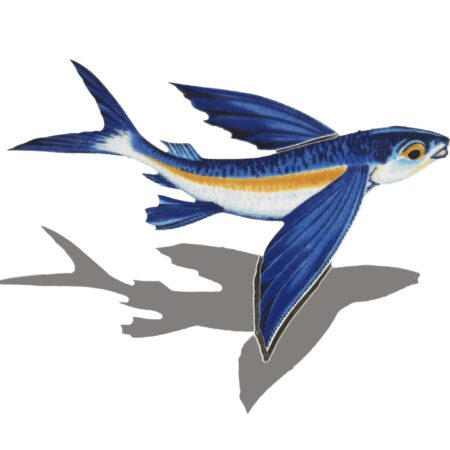 Flying Fish-B (with shadow)  8″x6″
