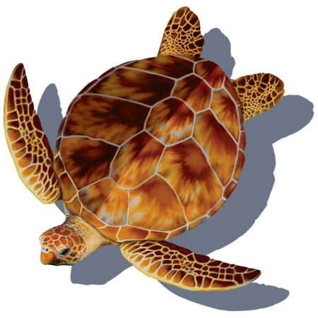 Loggerhead Turtle (with shadow)