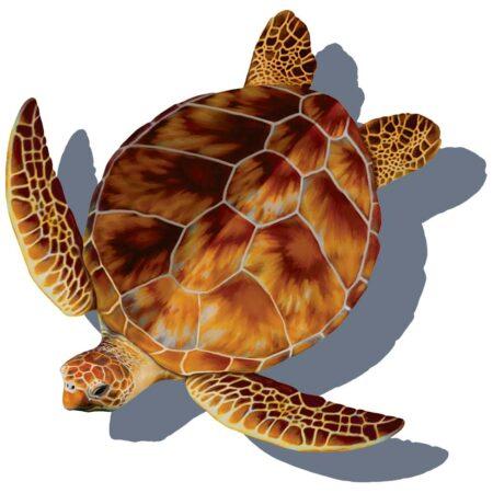 Loggerhead Turtle (with shadow) 10″x12″