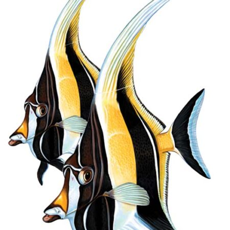 Moorish Idol (Double) 12″x19″