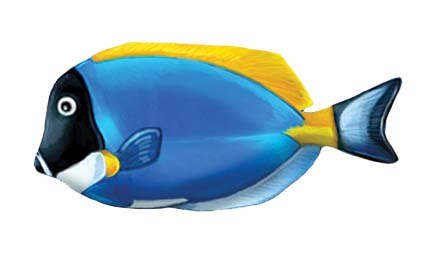 Powder Blue Tang 5″x2″