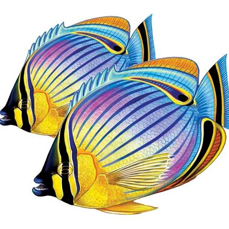 Redfin Butterflyfish (Double) 9″x8″