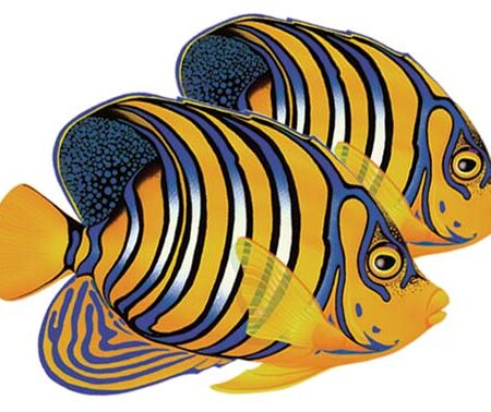 Regal Angelfish (Double) 8″x7″