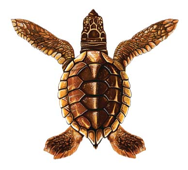 Baby Turtle – Brown 5″x5″