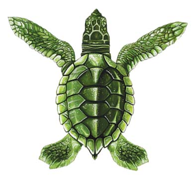Baby Turtle Green A 5″x5″