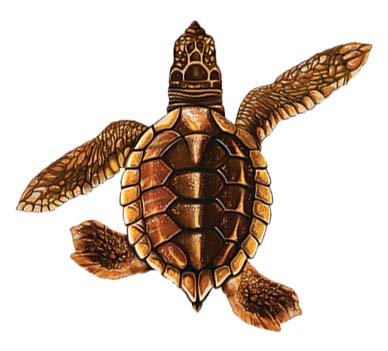 Baby Turtle B – Brown 5″x5″