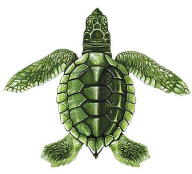 Baby Turtle Green C 5″x5″