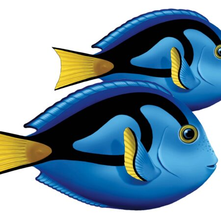 Blue Tang (Double) 9″ x 7″