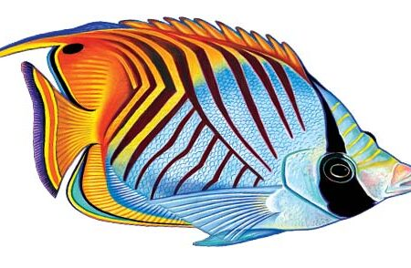 Threadfin Butterflyfish 9″x6″
