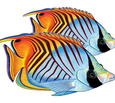 Threadfin Butterflyfish (Double) 9″x8″