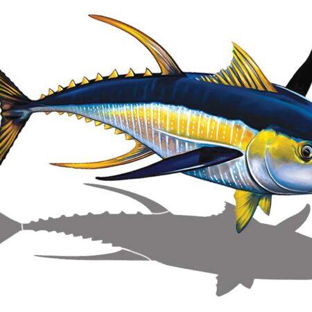 Tuna Right (with shadow) 15″ x 10