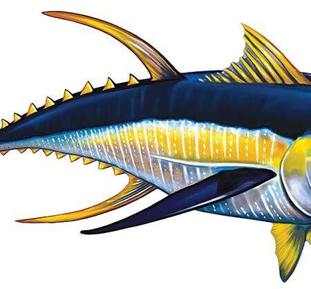 Tuna Right 15″ x 7″