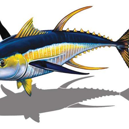 Tuna Reverse (with shadow) 15″ x 10″