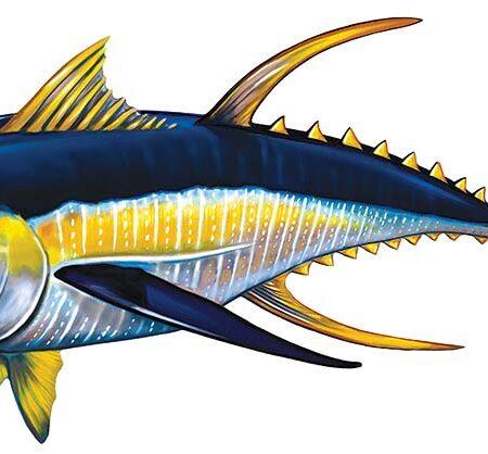 Tuna Reverse 15″ x 7