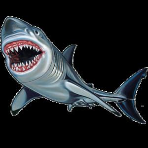 Shark 32″x18″